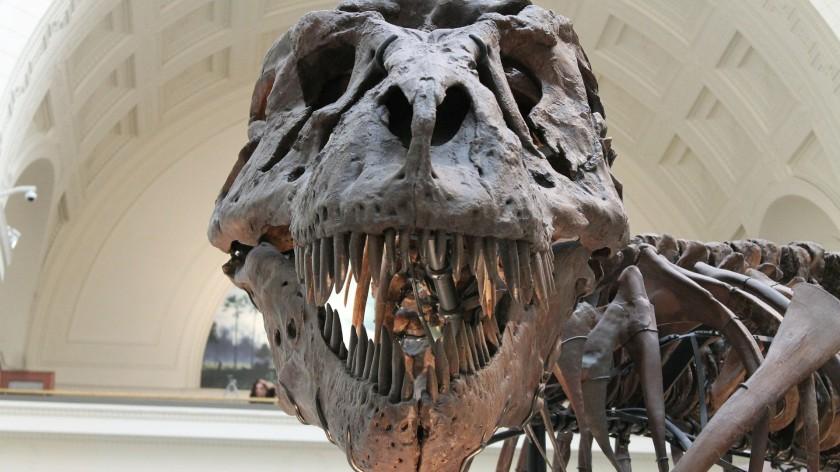 tyrannosaurus-447801_1920